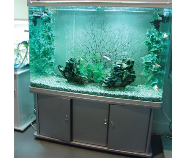 tropical aquarium fish tank custom made fish tanks aquarium discus