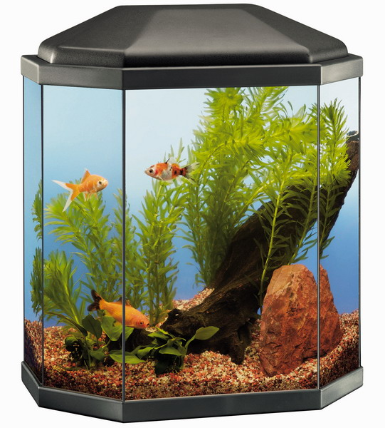 Rena Aqua Light 30 Glass Aquarium - GardenSite.co.uk