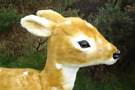/upload/media/Christmas/deer/baby deer close up.jpg