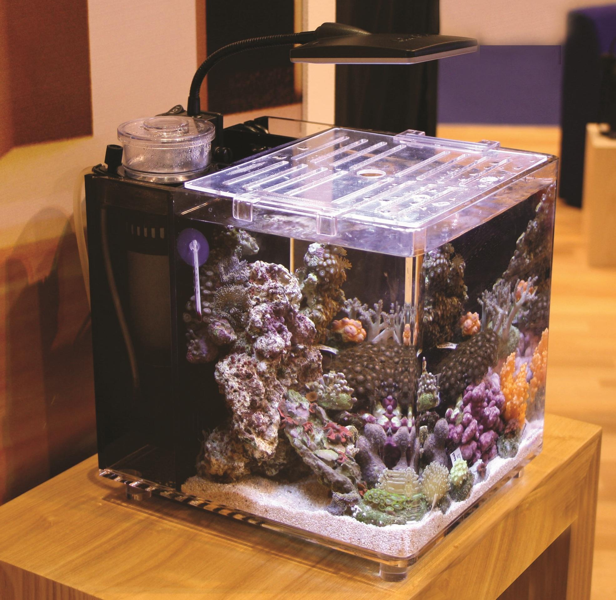 Saltwater aquarium sump design for Sa fishing 5 for 15