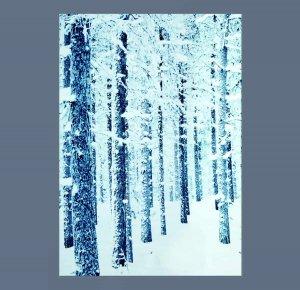as Snowy Trees Backdrop