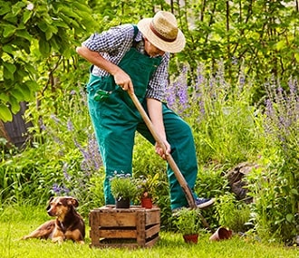 Gentleman gardening with his small dog by his side