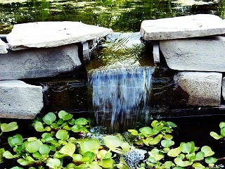image of a rock waterfall surrounded by water lettuce