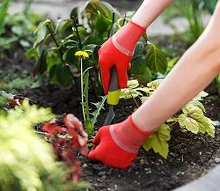 Weeds being dug up
