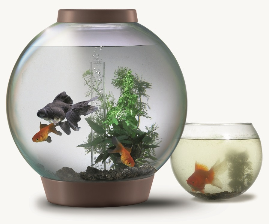 biOrb aquariums can replace a goldfish bowl with ease.