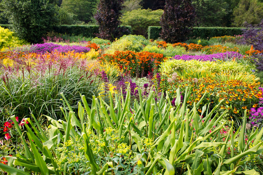A mix of flowers and plants within a landscape garden.