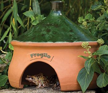 Frog inside a frog house