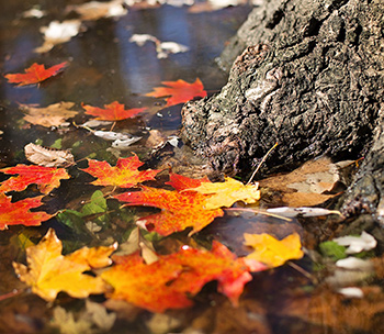 leaves fallen in pond
