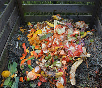 garden and kitchen waste inside compost bin