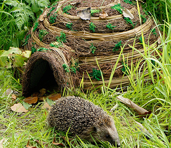 Hedgehog house in the garden