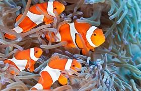 3 Orange and white tropical fish