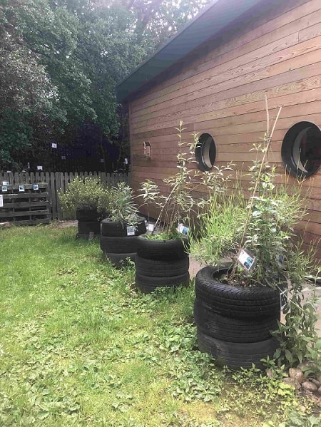 Used tyres as a base to help grow plants in them.