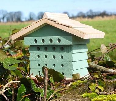 Green Bee Hive