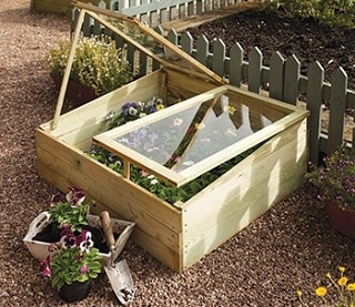 Flowers in cold frame