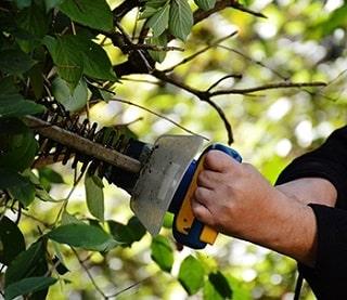 Cutting back leaves