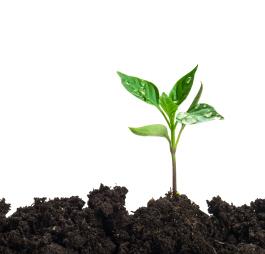 A germinating plant