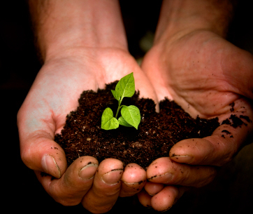 Pair of hands holding a pile of soil with a plant germinating from it